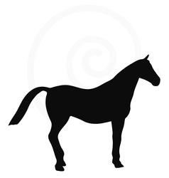 Horse silhouette isolated on white vector