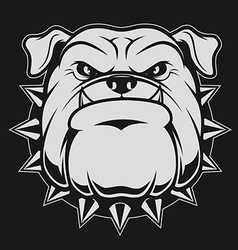 Head ferocious bulldog vector