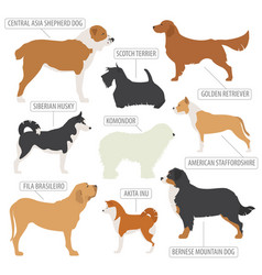 Working watching dog breeds collection isolated vector