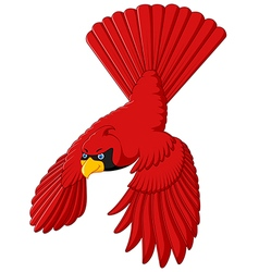 Flying cardinal bird vector