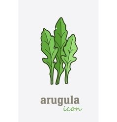 Arugula icon vegetable green leaves vector