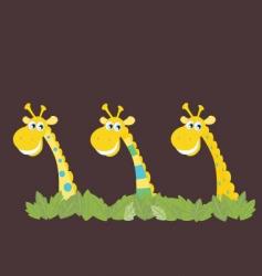 three african safari giraffes vector image
