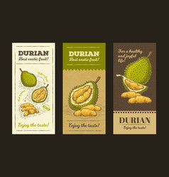 In design packing for durian vector