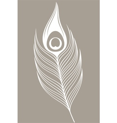 White peacock Feather vector image