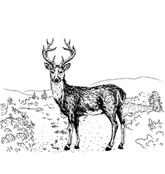 sketch of reindeer vector image vector image