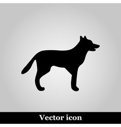 Dog icon on grey background vector image vector image