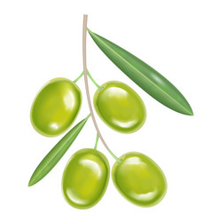 Green realistic olives vector