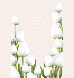 white tulips flowers blossom vector image