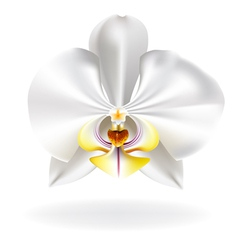 White orchid vector