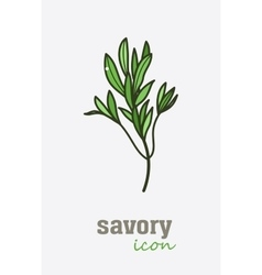 Savory icon Vegetable green leaves vector image