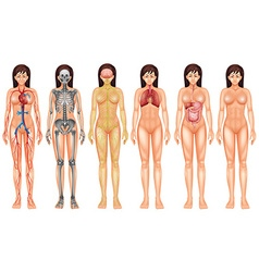 Body system vector image