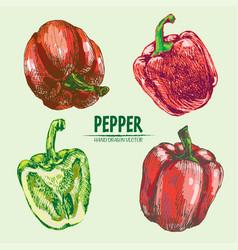 Digital detailed line art color pepper vector