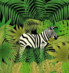 Picture zebra in the jungle vector