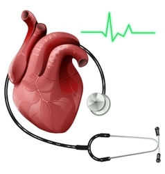 Realistic human heart and stethoscope vector