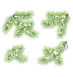 set green pine branch isolated on white fir vector image vector image