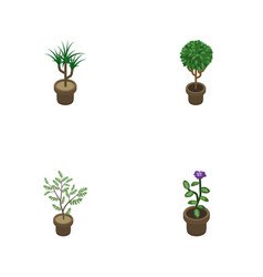 Isometric flower set of tree houseplant flower vector