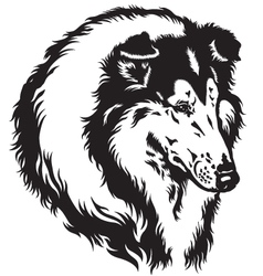 Collie head black white vector