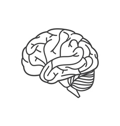Human brain line icon vector