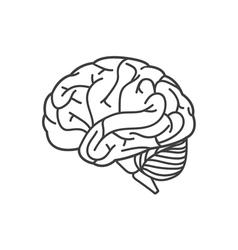 Human brain line icon vector image