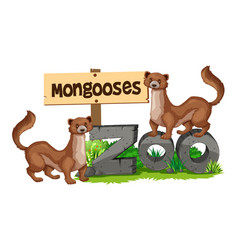 Mongooses standing on zoo sign vector