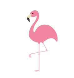 Pink flamingo Exotic tropical bird Zoo animal vector image