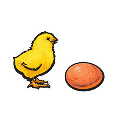 sketch hand drawn yellow chick and egg vector image