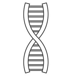 Dna strand icon vector