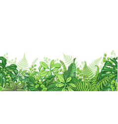 tropical plants line horizontal border vector image