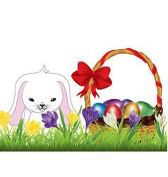 crocus and easter rabbit vector image