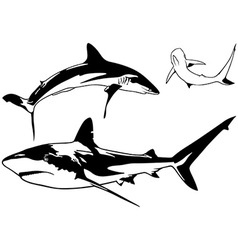 Caribbean reef shark set vector