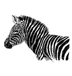Hand sketch zebra side vector