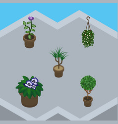 Isometric houseplant set of houseplant blossom vector