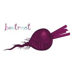 Beetroot vector image