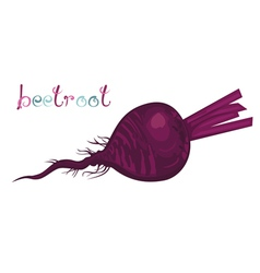 Beetroot vector