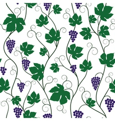 Bunch of grapes and vine vector