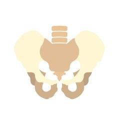 Human pelvis icon vector