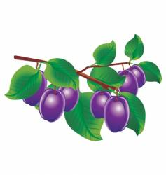 Plum illustration vector