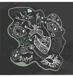Biology Doodles vector image vector image