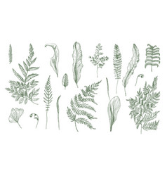 fern realistic collection hand drawn sprouts vector image vector image
