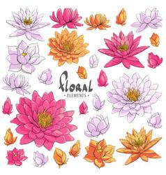 lotus floral vector image