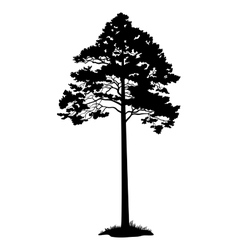 Pine tree black silhouette vector
