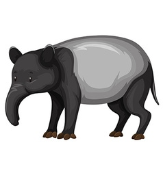 Tapir on white background vector