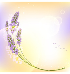 Purple Lavender Flower Colorful Background vector image vector image