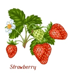 Bunch of red strawberries decorative berries and vector