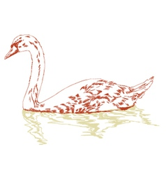 Swan on surface vector