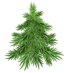 Green pine tree vector