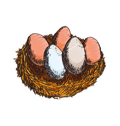 Fresh eggs hand draw vector
