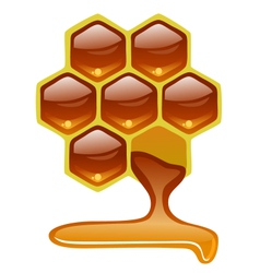 Honeycomb with honey vector