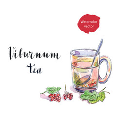 glass cup of viburnum tea vector image