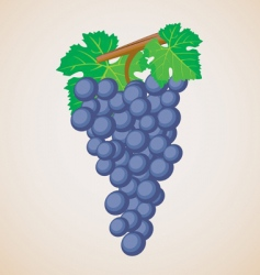 Grape fruit vector